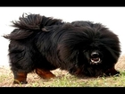 Top 10 Most Dangerous Dogs In The World