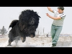 Top 10 Guard/Aggressive Dogs In The World