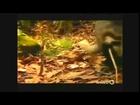 Dangerous Snakes Attack Full Nature Wildlife Documentary