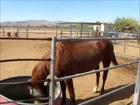 A Heart Warming Tour of Renewed Spirits Hooved Animal Rescue