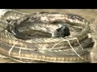 Black Mamba Snakes - Africa's Most Dangerous Snake [Full Nature Wildlife Documentary]