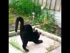 今週も働いてこいよ〜✊❗️俺は寝るのがお仕事 by大五郎 #猫 #ねこ #ぬこ #猫部 #猫侍 #ネコ #cat #cats #neko #cute #kitty #kitten #貓咪 #貓部